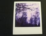 purple-trees-poloroid
