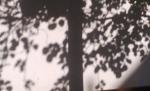 tree-shadow-1